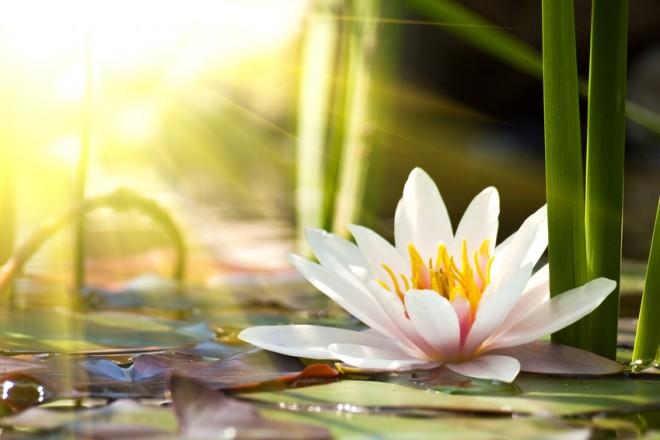Medytacja krok po kroku